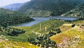 Porto - Douro Valley - Douro Cruiser