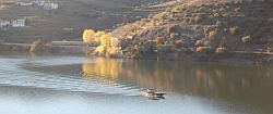 Ms Alto Douro Cruise - River Douro Cruise