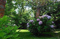 Garden at Casal de Fontes Beiras Portugal