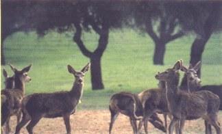 Sao Mamede Natural Park