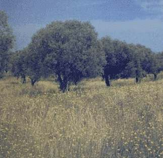 The plains of Portugal