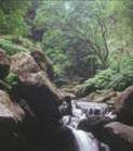 The Laurissilva Forest of Madeira - Unesco World Heritage site