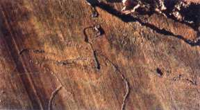 World Heritage Site - Prehistoric site - Foz Coa - North Portugal